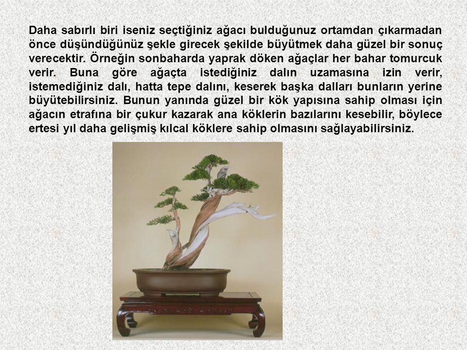 Nasıl yetistirilir? Bonsai yetiştirmeye başlarken yapılması gereken ilk şey sonuçta nasıl bir bonsai istediğinize karar vermektir. Ağacın doğal halind