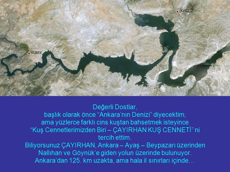 Değerli Dostlar, başlık olarak önce Ankara'nın Denizi diyecektim, ama yüzlerce farklı cins kuştan bahsetmek isteyince Kuş Cennetlerimizden Biri – ÇAYIRHAN KUŞ CENNETİ ni tercih ettim.