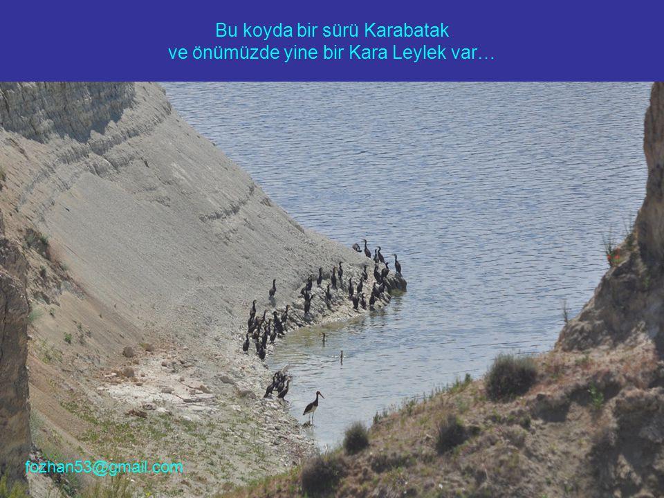 Bu koyda bir sürü Karabatak ve önümüzde yine bir Kara Leylek var… fozhan53@gmail.com