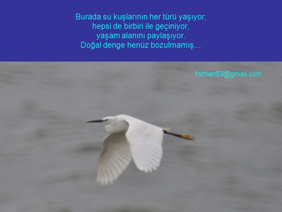 Burada su kuşlarının her türü yaşıyor, hepsi de birbiri ile geçiniyor, yaşam alanını paylaşıyor.