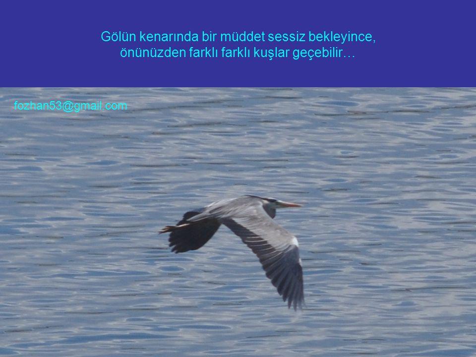 Gölün kenarında bir müddet sessiz bekleyince, önünüzden farklı farklı kuşlar geçebilir… fozhan53@gmail.com