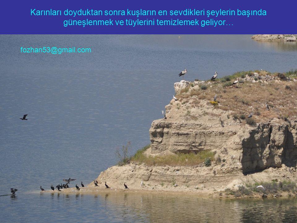 Karınları doyduktan sonra kuşların en sevdikleri şeylerin başında güneşlenmek ve tüylerini temizlemek geliyor… fozhan53@gmail.com