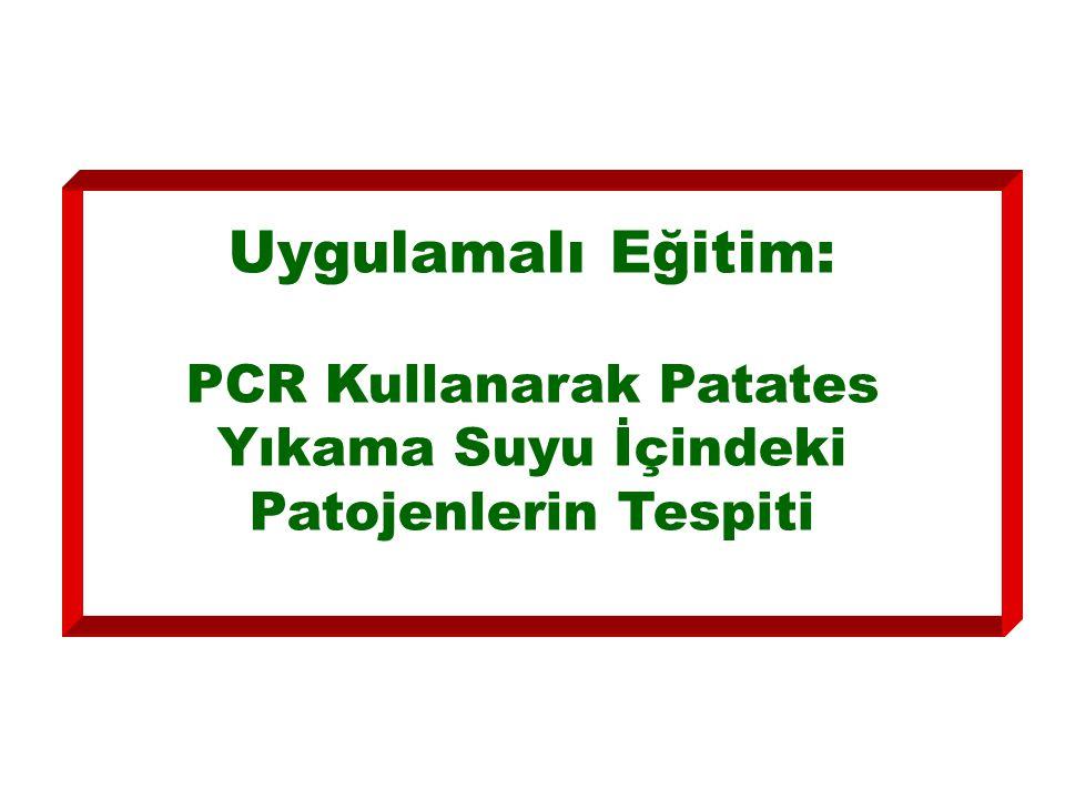 Uygulamalı Eğitim: PCR Kullanarak Patates Yıkama Suyu İçindeki Patojenlerin Tespiti
