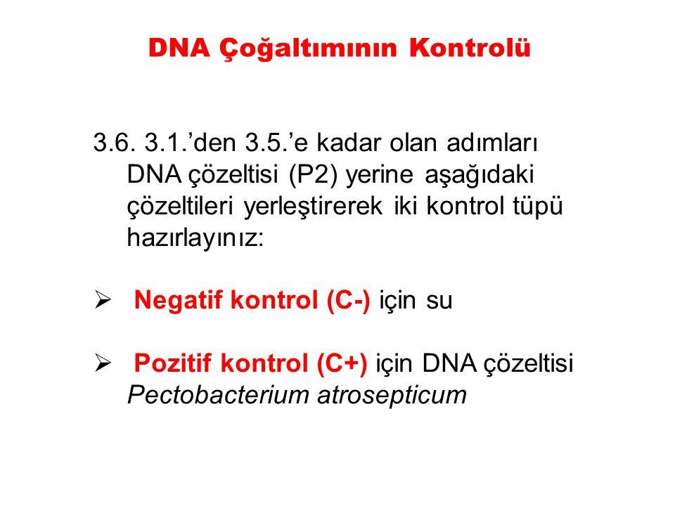 3.6. 3.1.'den 3.5.'e kadar olan adımları DNA çözeltisi (P2) yerine aşağıdaki çözeltileri yerleştirerek iki kontrol tüpü hazırlayınız:  Negatif kontro