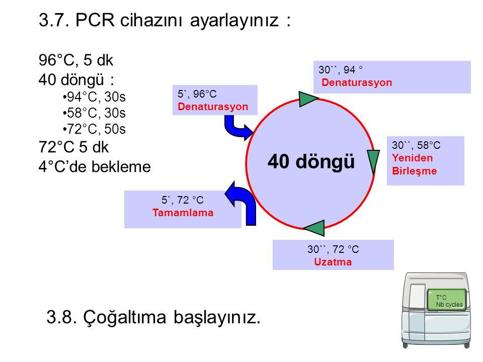 5`, 72 °C Tamamlama 30``, 94 ° Denaturasyon 40 döngü 5`, 96°C Denaturasyon 30``, 58°C Yeniden Birleşme 30``, 72 °C Uzatma 3.7.