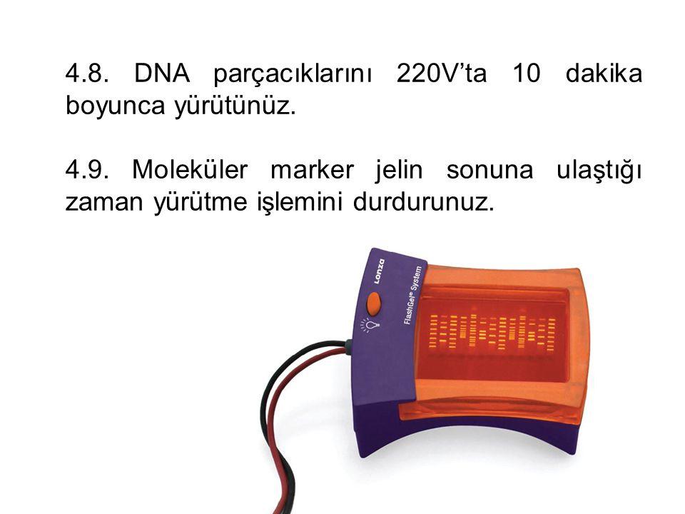 4.8. DNA parçacıklarını 220V'ta 10 dakika boyunca yürütünüz.
