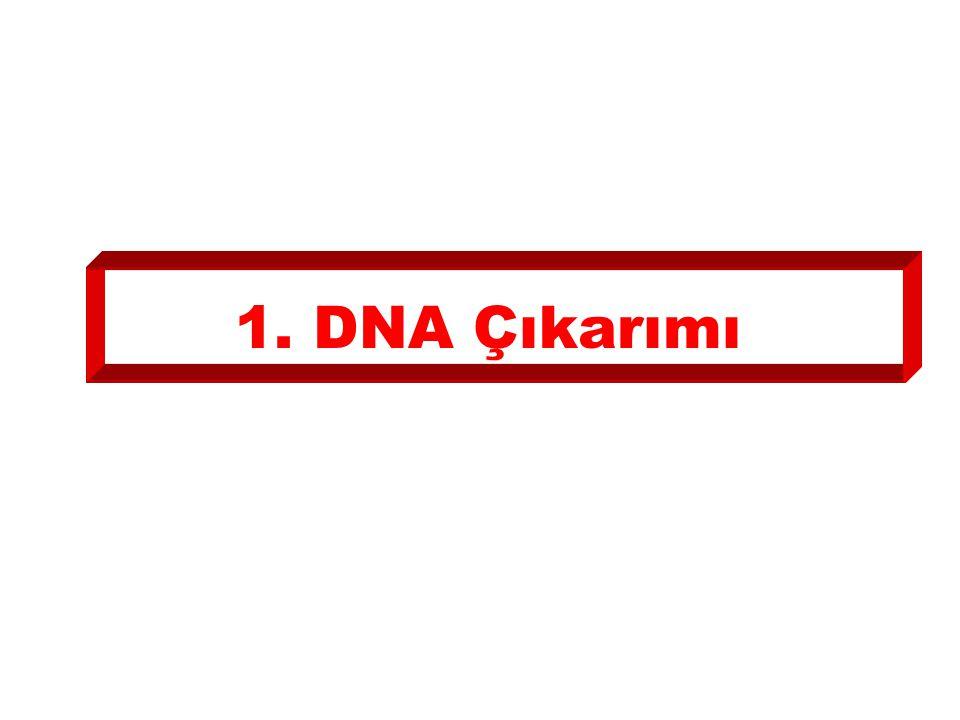 1. DNA Çıkarımı
