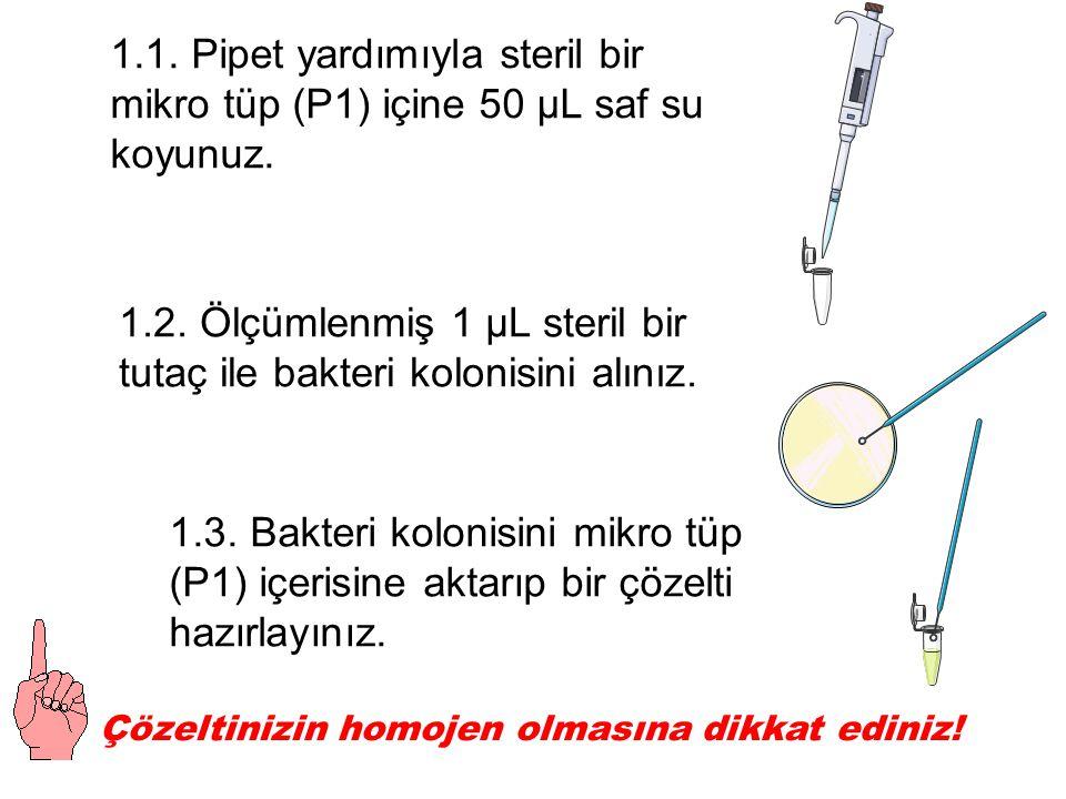1.1. Pipet yardımıyla steril bir mikro tüp (P1) içine 50 µL saf su koyunuz.