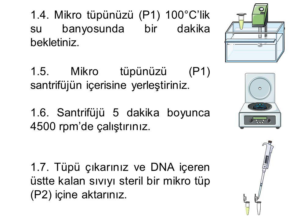 2. PCR Karışımının (M) Hazırlanışı