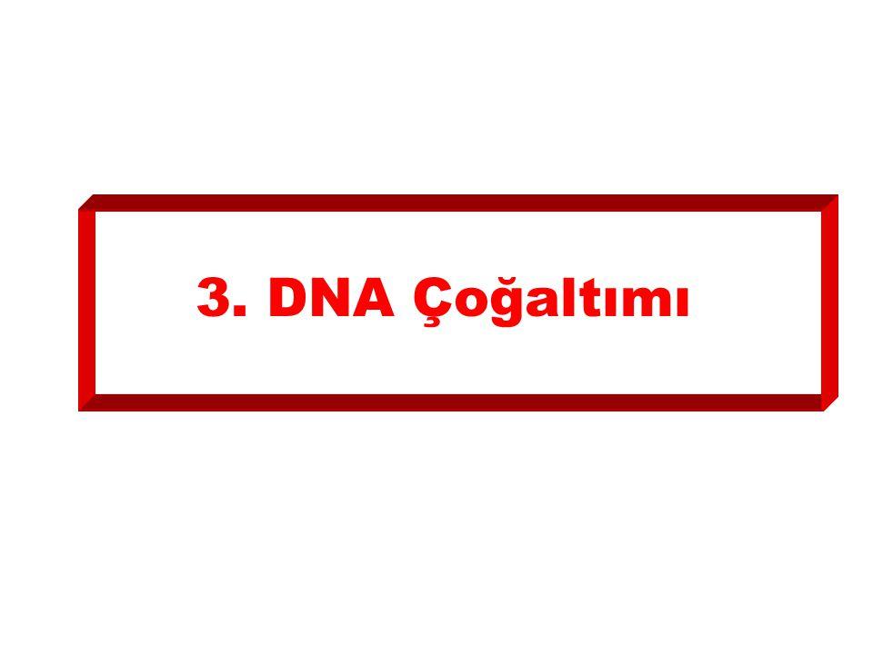 3. DNA Çoğaltımı