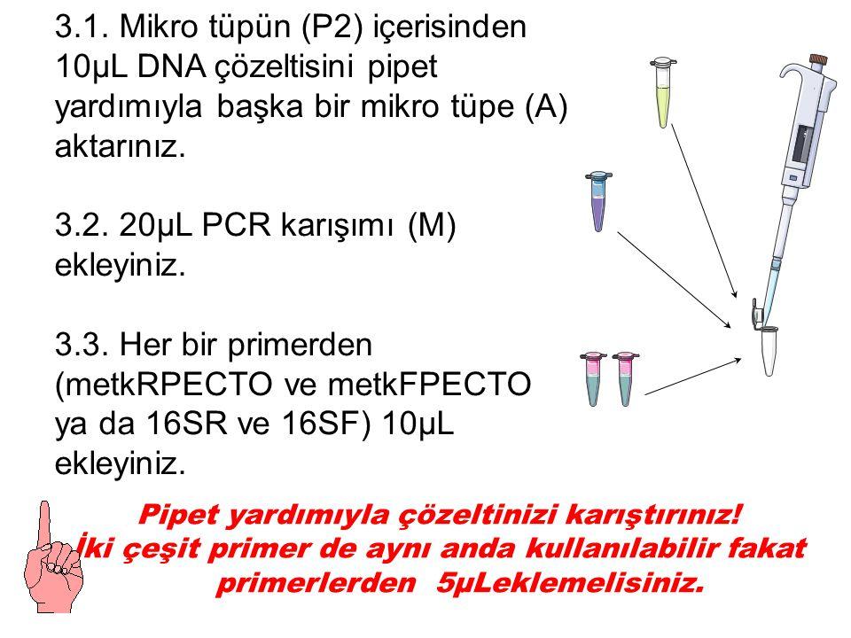 3.1. Mikro tüpün (P2) içerisinden 10µL DNA çözeltisini pipet yardımıyla başka bir mikro tüpe (A) aktarınız. 3.2. 20µL PCR karışımı (M) ekleyiniz. 3.3.