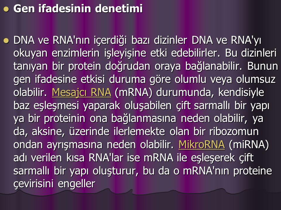 Gen ifadesinin denetimi Gen ifadesinin denetimi DNA ve RNA nın içerdiği bazı dizinler DNA ve RNA yı okuyan enzimlerin işleyişine etki edebilirler.