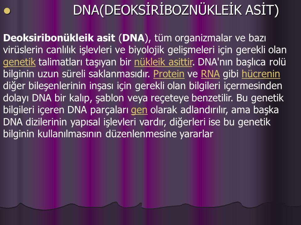 DNA(DEOKSİRİBOZNÜKLEİK ASİT) DNA(DEOKSİRİBOZNÜKLEİK ASİT) Deoksiribonükleik asit (DNA), tüm organizmalar ve bazı virüslerin canlılık işlevleri ve biyolojik gelişmeleri için gerekli olan genetik talimatları taşıyan bir nükleik asittir.