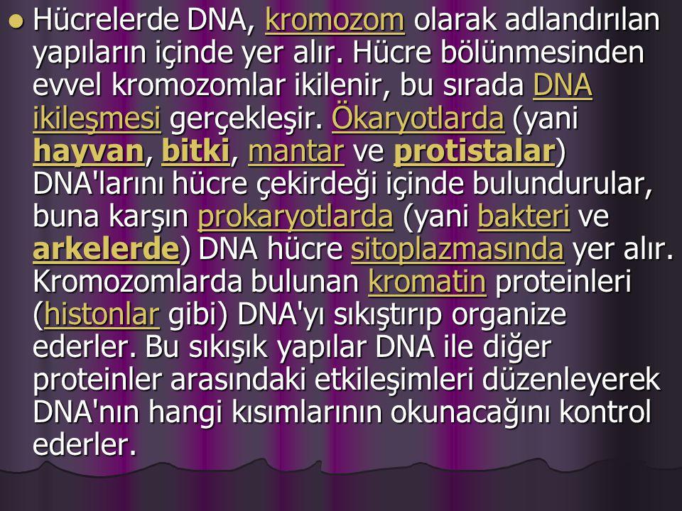 Hücrelerde DNA, kromozom olarak adlandırılan yapıların içinde yer alır.