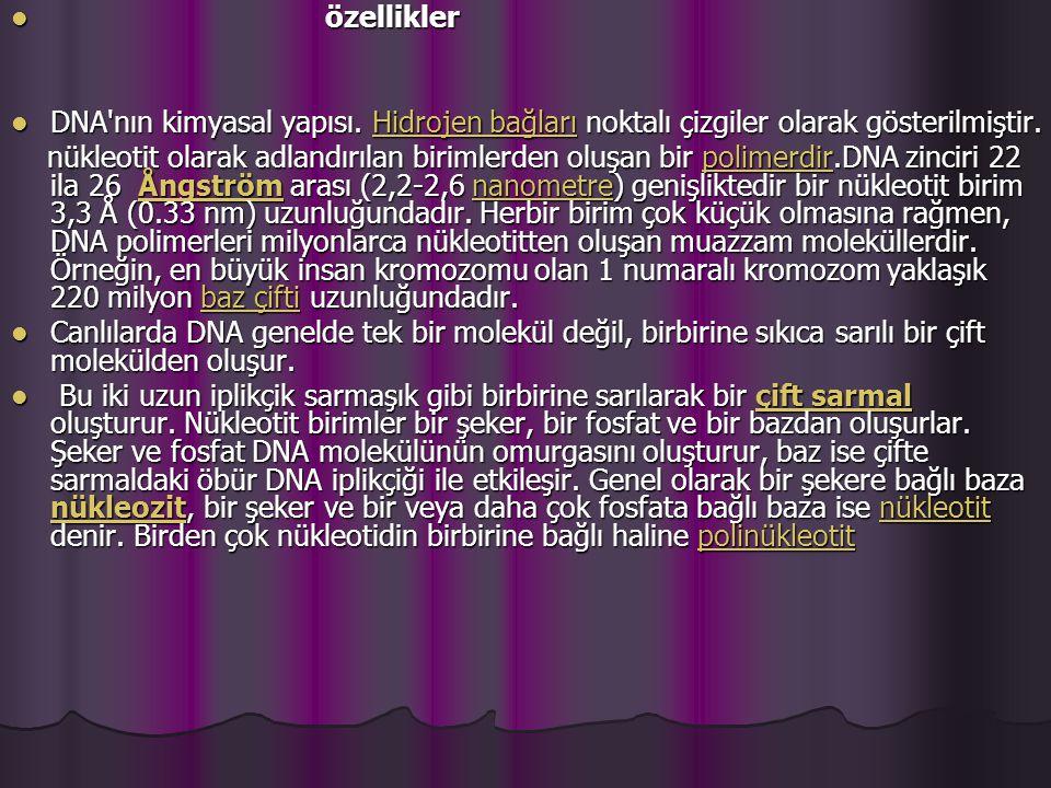 özellikler özellikler DNA nın kimyasal yapısı.