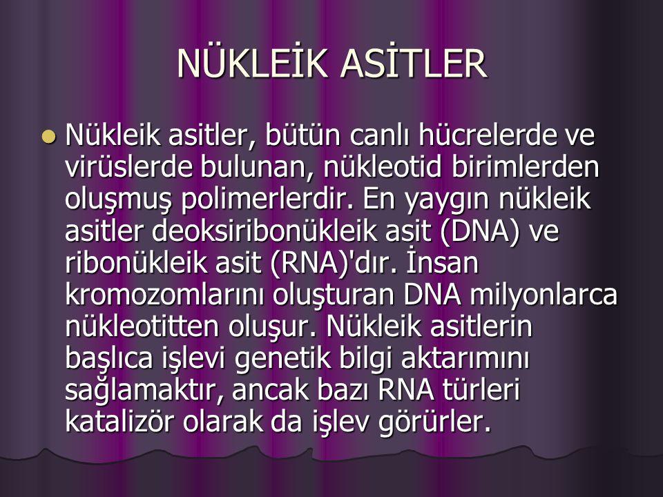 NÜKLEİK ASİTLER Nükleik asitler, bütün canlı hücrelerde ve virüslerde bulunan, nükleotid birimlerden oluşmuş polimerlerdir.