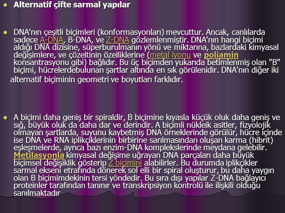 Alternatif çifte sarmal yapılar Alternatif çifte sarmal yapılar DNA nın çeşitli biçimleri (konformasyonları) mevcuttur.
