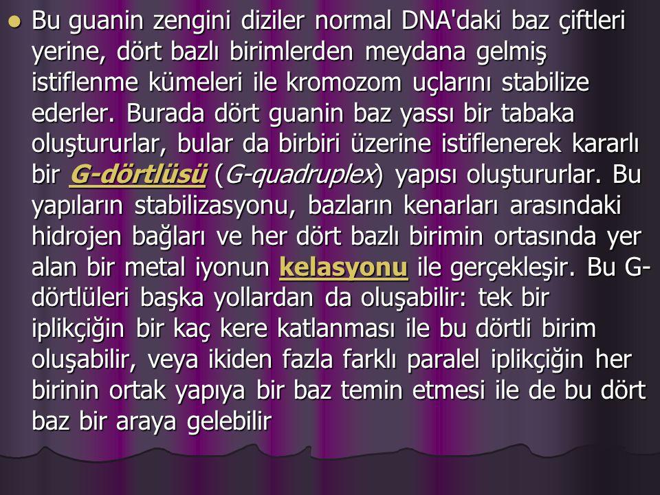 Bu guanin zengini diziler normal DNA daki baz çiftleri yerine, dört bazlı birimlerden meydana gelmiş istiflenme kümeleri ile kromozom uçlarını stabilize ederler.