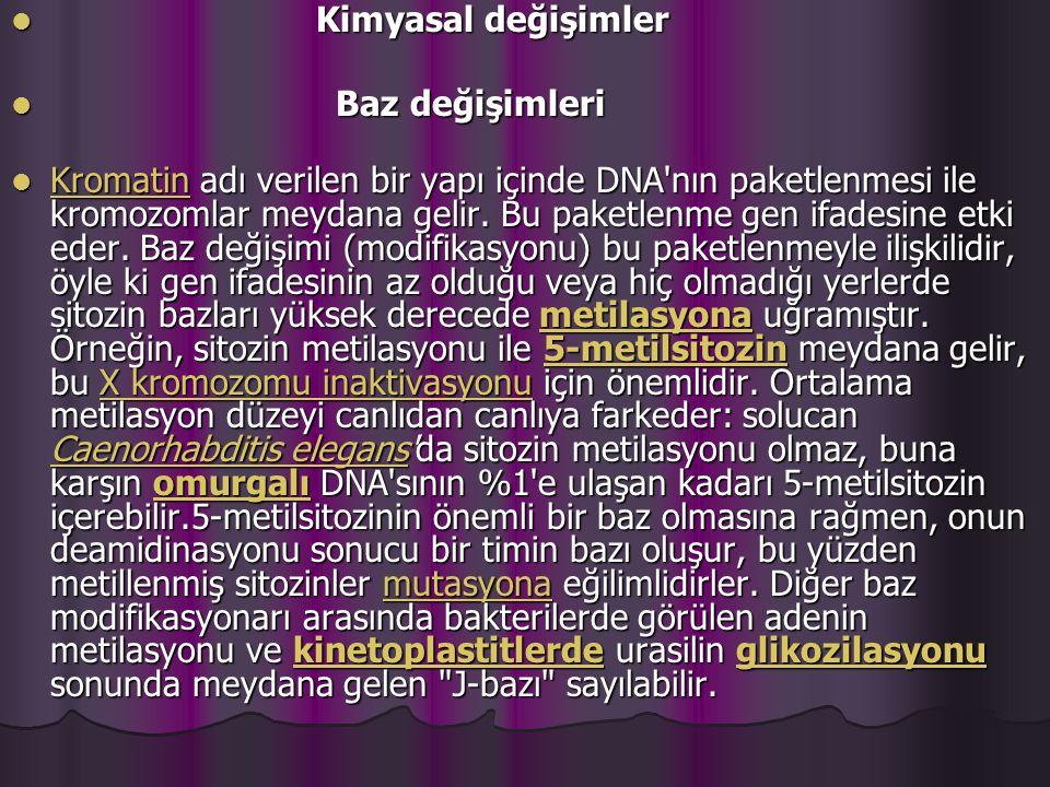 Kimyasal değişimler Kimyasal değişimler Baz değişimleri Baz değişimleri Kromatin adı verilen bir yapı içinde DNA nın paketlenmesi ile kromozomlar meydana gelir.