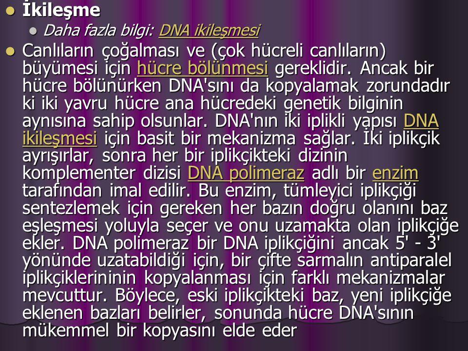 İkileşme İkileşme Daha fazla bilgi: DNA ikileşmesi Daha fazla bilgi: DNA ikileşmesiDNA ikileşmesiDNA ikileşmesi Canlıların çoğalması ve (çok hücreli canlıların) büyümesi için hücre bölünmesi gereklidir.