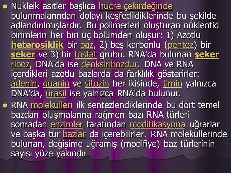DNA DNA