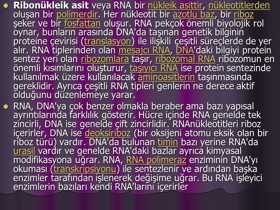 Ribonükleik asit veya RNA bir nükleik asittir, nükleotitlerden oluşan bir polimerdir.