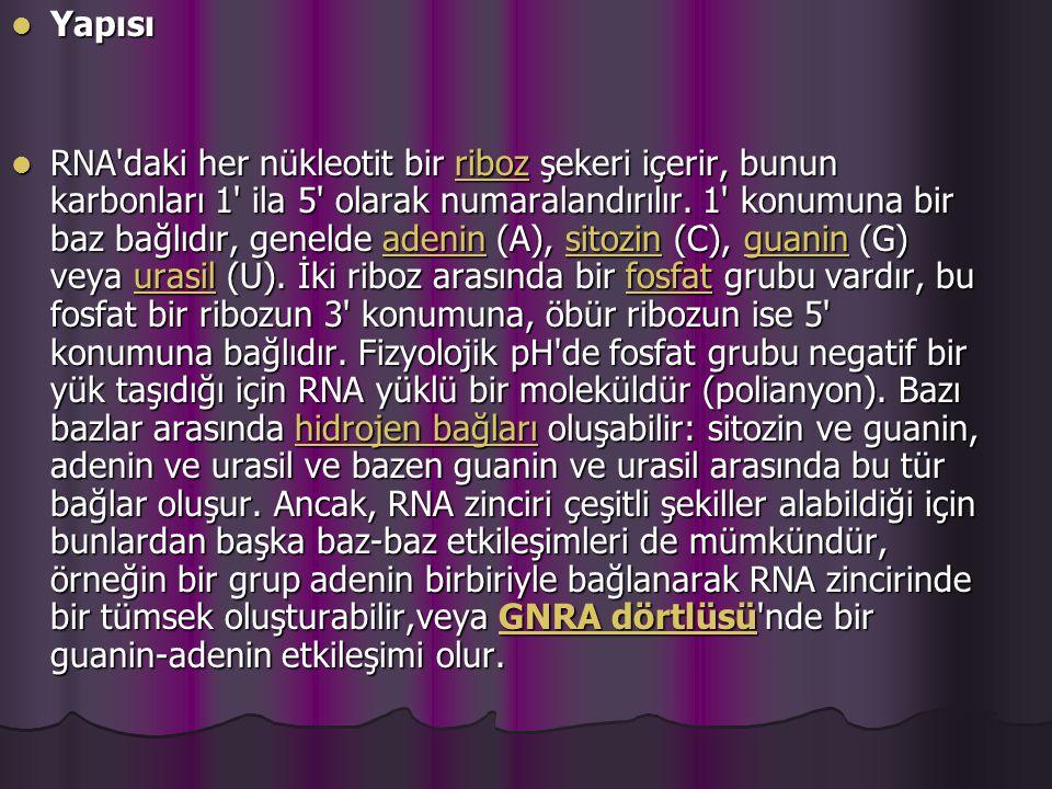 Yapısı Yapısı RNA daki her nükleotit bir riboz şekeri içerir, bunun karbonları 1 ila 5 olarak numaralandırılır.