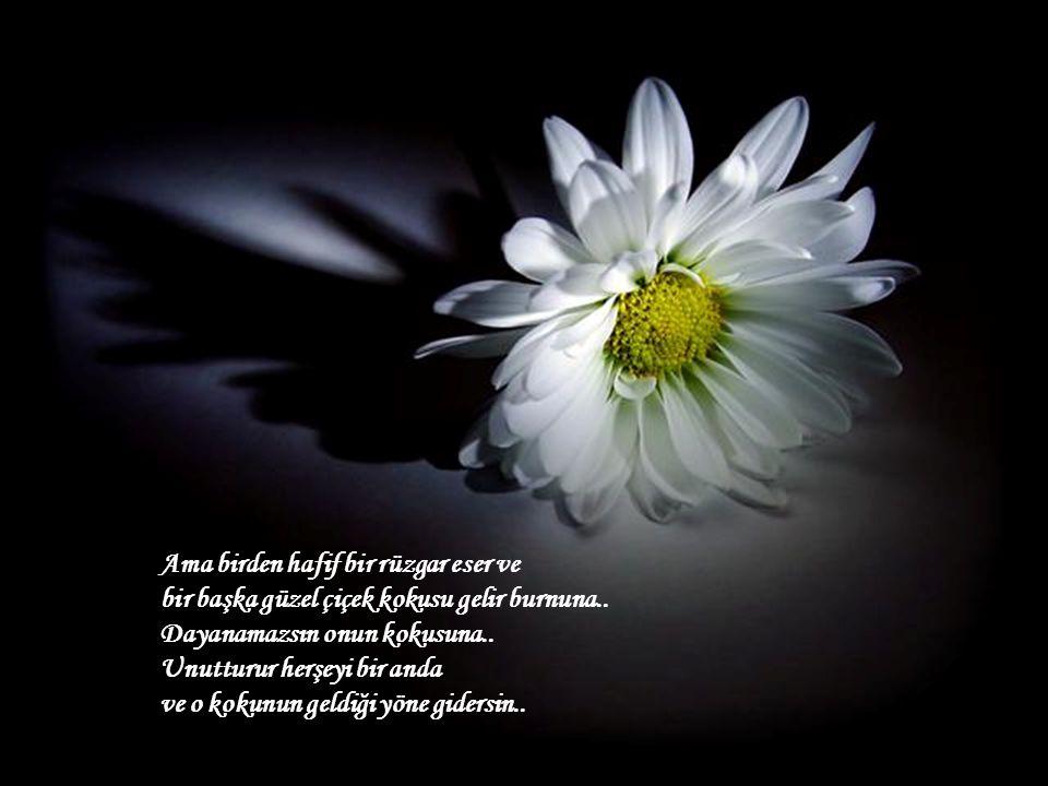 Ama birden hafif bir rüzgar eser ve bir başka güzel çiçek kokusu gelir burnuna..