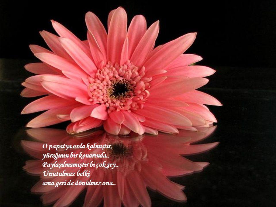 Ama birden hafif bir rüzgar eser ve bir başka güzel çiçek kokusu gelir burnuna.. Dayanamazsın onun kokusuna.. Unutturur herşeyi bir anda ve o kokunun