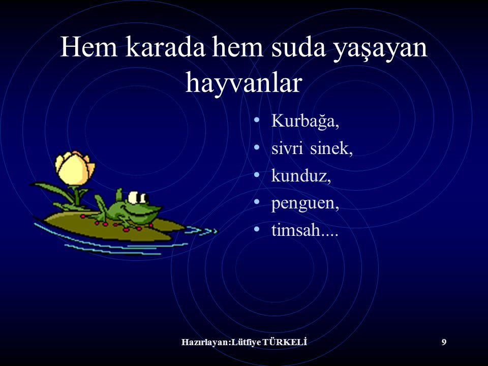 Hazırlayan:Lütfiye TÜRKELİ8 Suda yaşayan hayvanlar Yengeç, mürekkep balığı, sünger, midye....