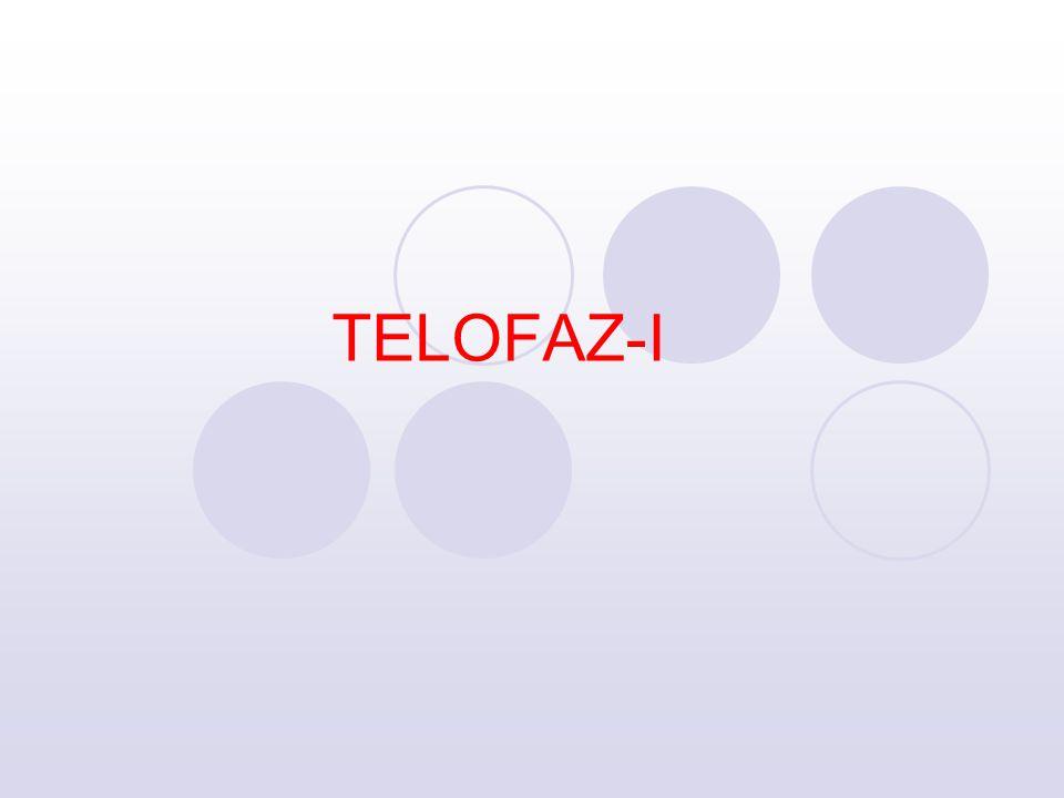 TELOFAZ-I