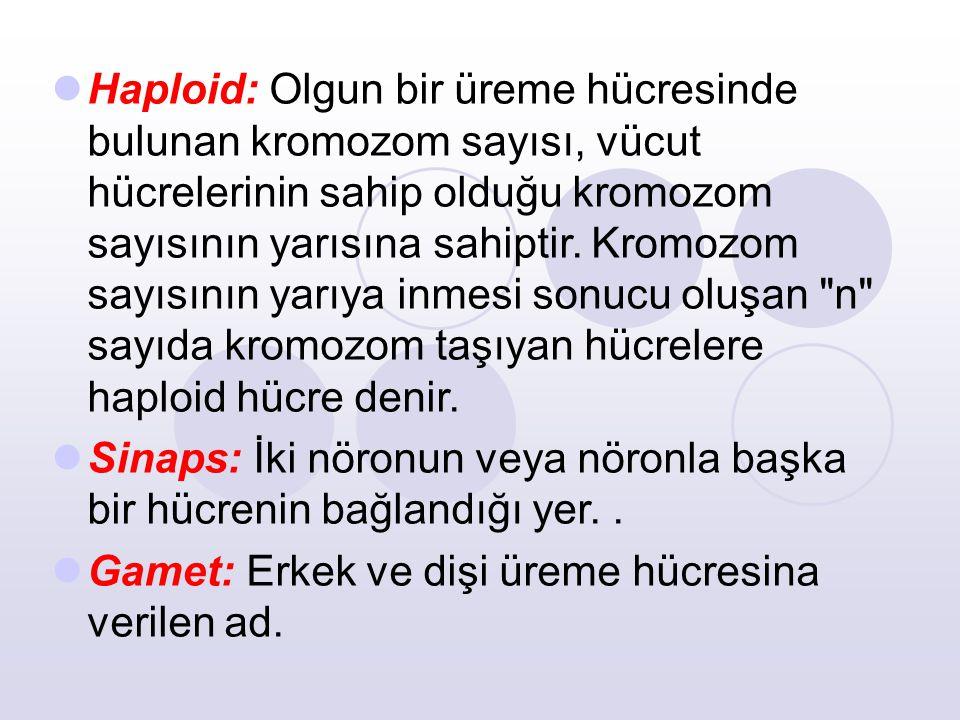 Haploid: Olgun bir üreme hücresinde bulunan kromozom sayısı, vücut hücrelerinin sahip olduğu kromozom sayısının yarısına sahiptir.