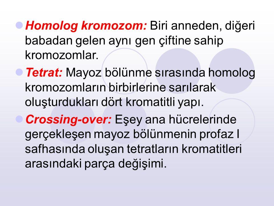 Homolog kromozom: Biri anneden, diğeri babadan gelen aynı gen çiftine sahip kromozomlar.