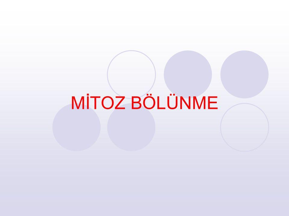 G2 evresinin tamamlanması, kromozomların türlere özgü şekil ve sayıyı kazanmasıyla mitoz bölünmeye geçilir.