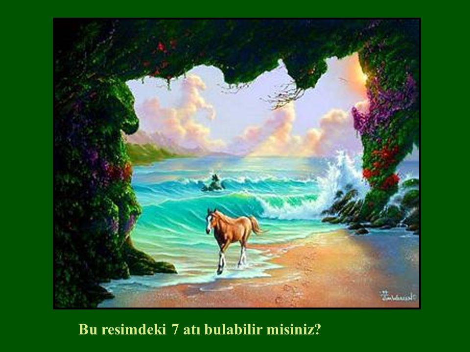 Bu resimdeki 7 atı bulabilir misiniz?