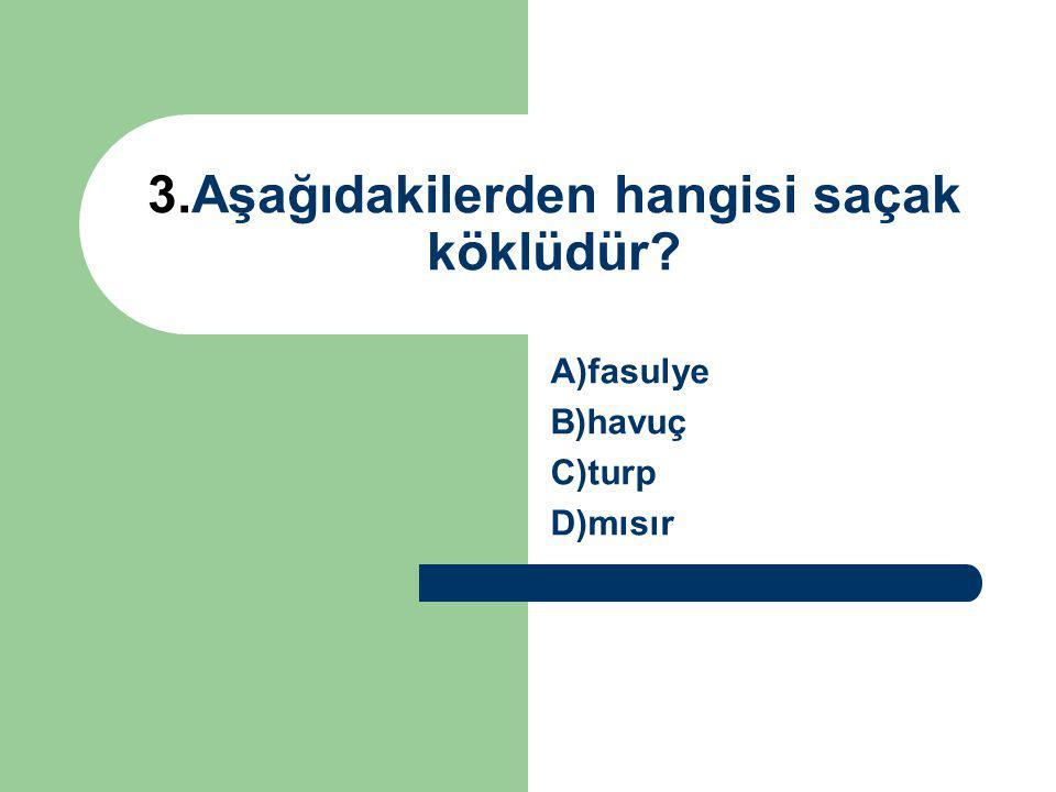 3.Aşağıdakilerden hangisi saçak köklüdür? A)fasulye B)havuç C)turp D)mısır