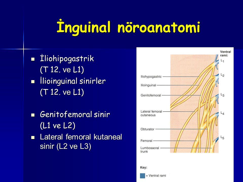 İnguinal nöroanatomi