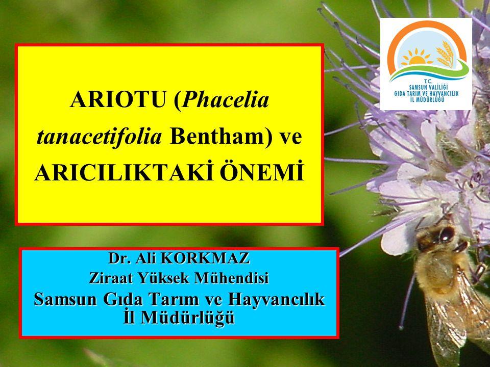 ARIOTU (Phacelia tanacetifolia Bentham) ve ARICILIKTAKİ ÖNEMİ Dr. Ali KORKMAZ Ziraat Yüksek Mühendisi Samsun Gıda Tarım ve Hayvancılık İl Müdürlüğü