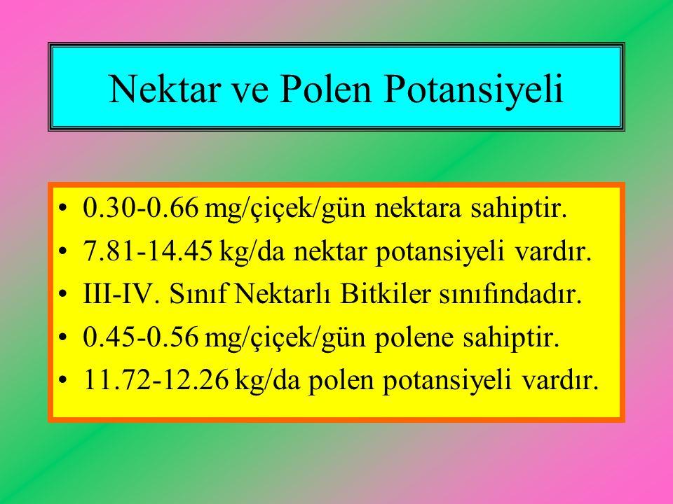 Nektar ve Polen Potansiyeli 0.30-0.66 mg/çiçek/gün nektara sahiptir. 7.81-14.45 kg/da nektar potansiyeli vardır. III-IV. Sınıf Nektarlı Bitkiler sınıf