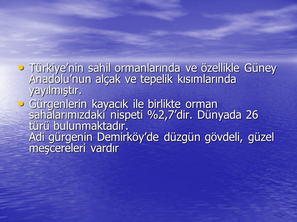 Türkiye'nin sahil ormanlarında ve özellikle Güney Anadolu'nun alçak ve tepelik kısımlarında yayılmıştır. Türkiye'nin sahil ormanlarında ve özellikle G