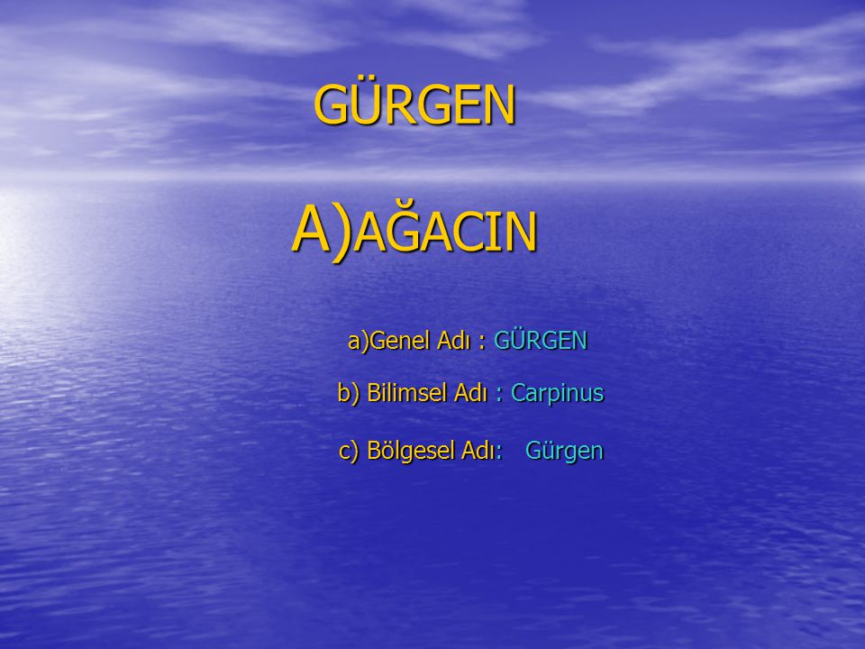 GÜRGEN A) AĞACIN a)Genel Adı : GÜRGEN a)Genel Adı : GÜRGEN b) Bilimsel Adı : Carpinus b) Bilimsel Adı : Carpinus c) Bölgesel Adı: Gürgen c) Bölgesel Adı: Gürgen