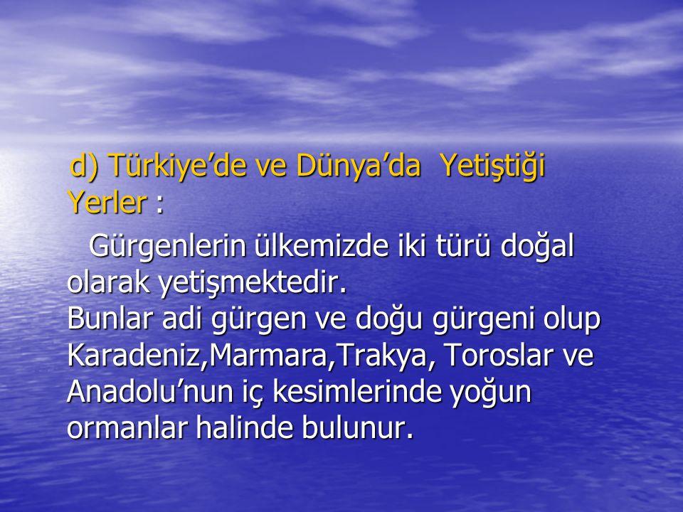 d) Türkiye'de ve Dünya'da Yetiştiği Yerler : d) Türkiye'de ve Dünya'da Yetiştiği Yerler : Gürgenlerin ülkemizde iki türü doğal olarak yetişmektedir.