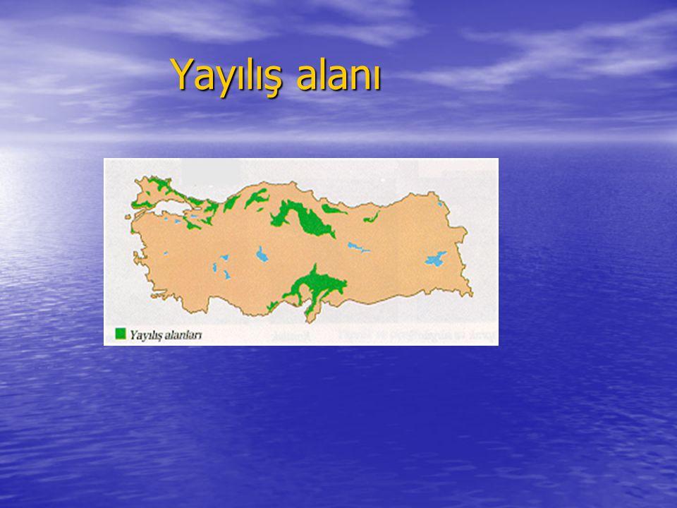Adi Gürgen (Corpinus betulus L.) Trakya'da ve Karadeniz2in kıyı kesimlerinde genellikle meşe, kayın ve kestane ağaçlarıyla karışık ormanlar halinde yaygındır.