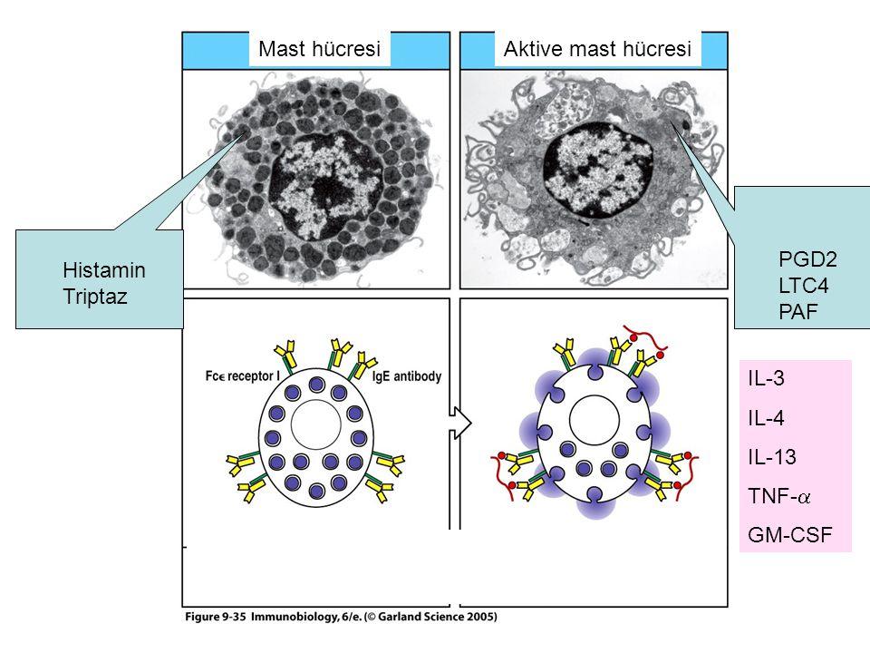 Allerjen nedir? Seçici olarak Th2 hücreleri uyaran ve IgE yanıtına neden olan antijenler allerjen ismi alıyor.Seçici olarak Th2 hücreleri uyaran ve Ig