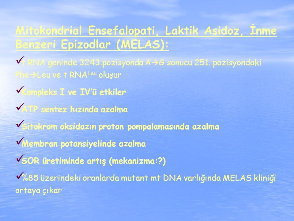 Mitokondrial Ensefalopati, Laktik Asidoz, İnme Benzeri Epizodlar (MELAS): t RNA geninde 3243.pozisyonda A  G sonucu 251.