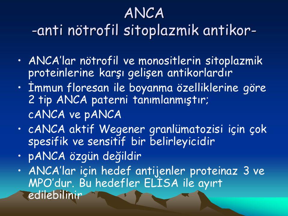 ANCA -anti nötrofil sitoplazmik antikor- ANCA'lar nötrofil ve monositlerin sitoplazmik proteinlerine karşı gelişen antikorlardır İmmun floresan ile boyanma özelliklerine göre 2 tip ANCA paterni tanımlanmıştır; cANCA ve pANCA cANCA aktif Wegener granlümatozisi için çok spesifik ve sensitif bir belirleyicidir pANCA özgün değildir ANCA'lar için hedef antijenler proteinaz 3 ve MPO'dur.