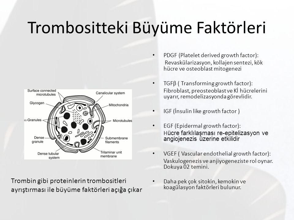 Trombositteki Büyüme Faktörleri PDGF (Platelet derived growth factor): Revaskülarizasyon, kollajen sentezi, kök hücre ve osteoblast mitogenezi TGFβ (