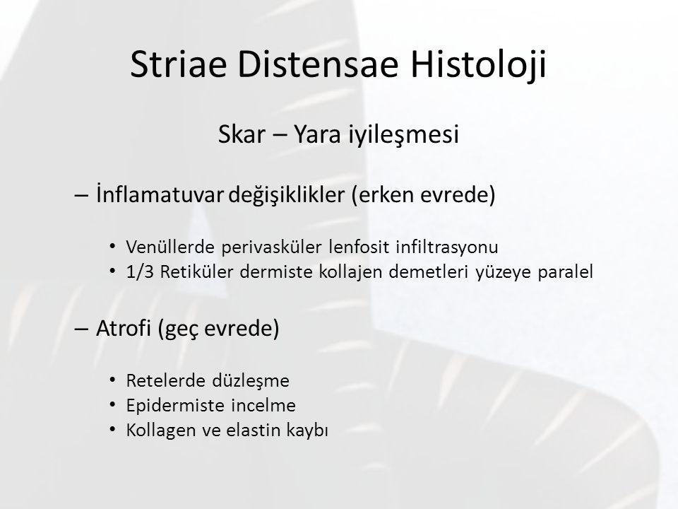 Striae Distensae Histoloji Skar – Yara iyileşmesi – İnflamatuvar değişiklikler (erken evrede) Venüllerde perivasküler lenfosit infiltrasyonu 1/3 Retik