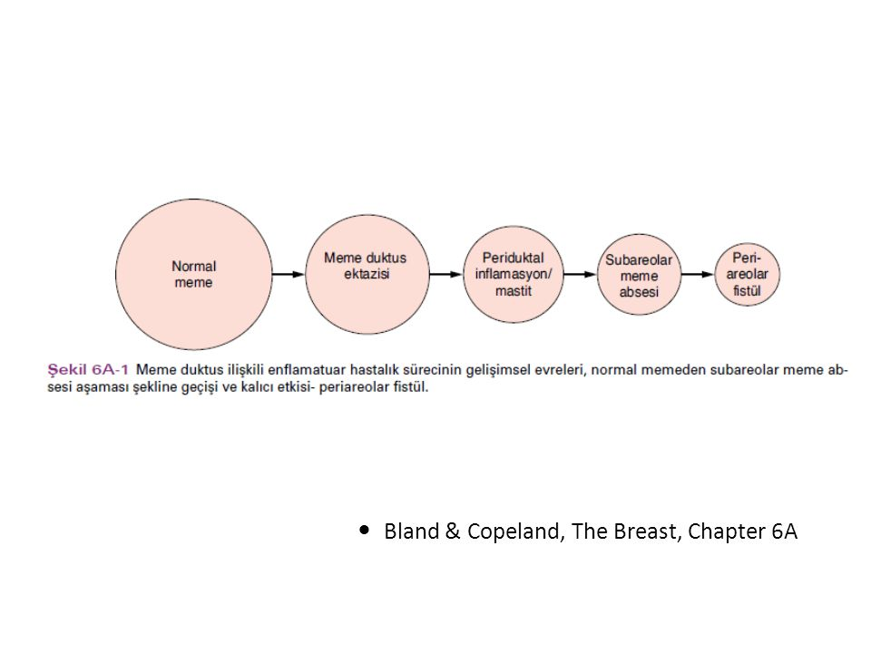 Bland & Copeland, The Breast, Chapter 6A