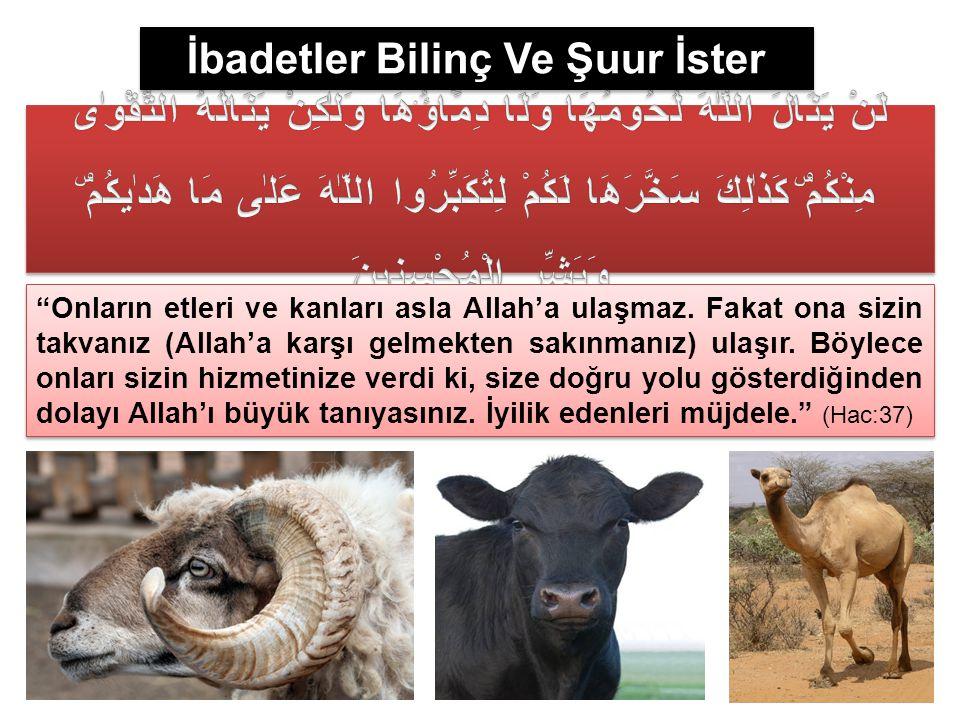 """İbadetler Bilinç Ve Şuur İster """"Onların etleri ve kanları asla Allah'a ulaşmaz. Fakat ona sizin takvanız (Allah'a karşı gelmekten sakınmanız) ulaşır."""